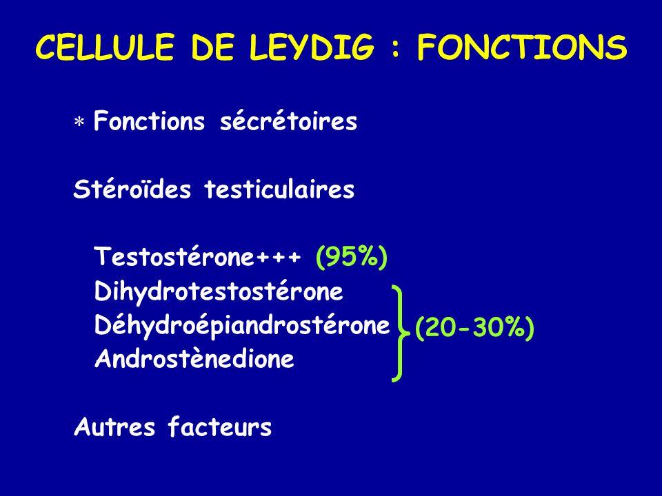 CELLULE DE LEYDIG : FONCTIONS  Fonctions sécrétoires Stéroïdes testiculaires Testostérone+++ (95%) Dihydrotestostérone Déhydroépiandrostérone Androstènedione Autres facteurs (20-30%)