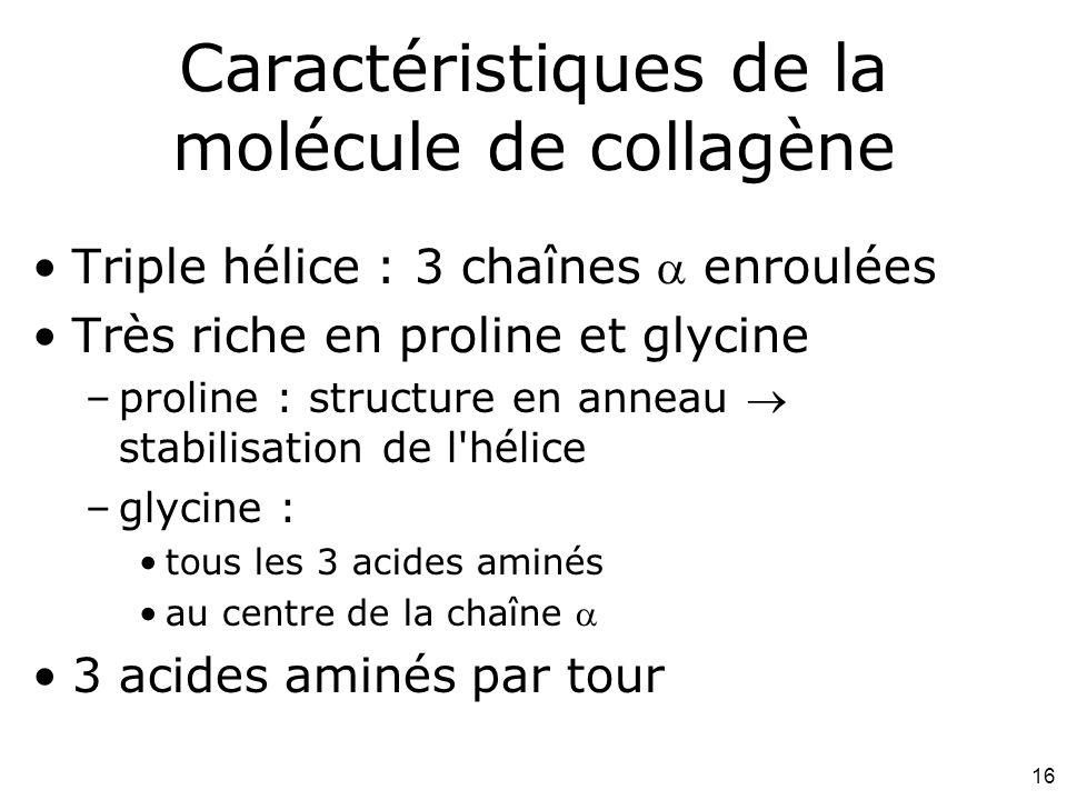 16 Caractéristiques de la molécule de collagène Triple hélice : 3 chaînes  enroulées Très riche en proline et glycine –proline : structure en anneau  stabilisation de l hélice –glycine : tous les 3 acides aminés au centre de la chaîne  3 acides aminés par tour