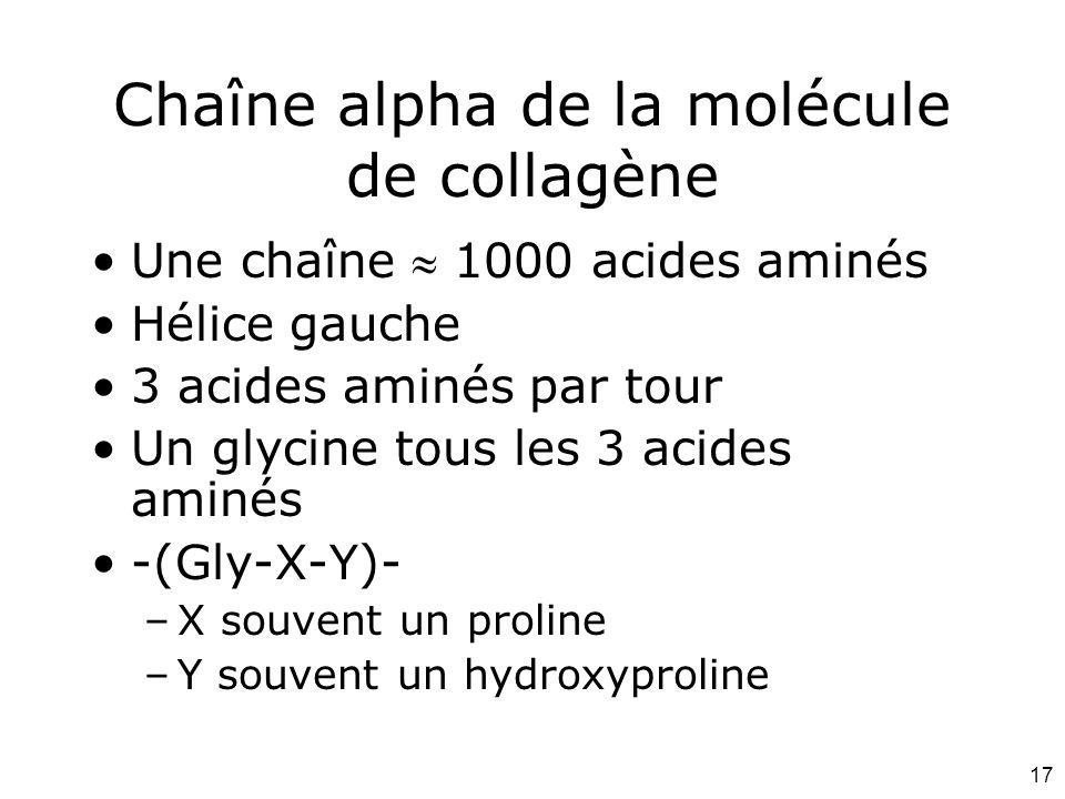 17 Chaîne alpha de la molécule de collagène Une chaîne  1000 acides aminés Hélice gauche 3 acides aminés par tour Un glycine tous les 3 acides aminés -(Gly-X-Y)- –X souvent un proline –Y souvent un hydroxyproline