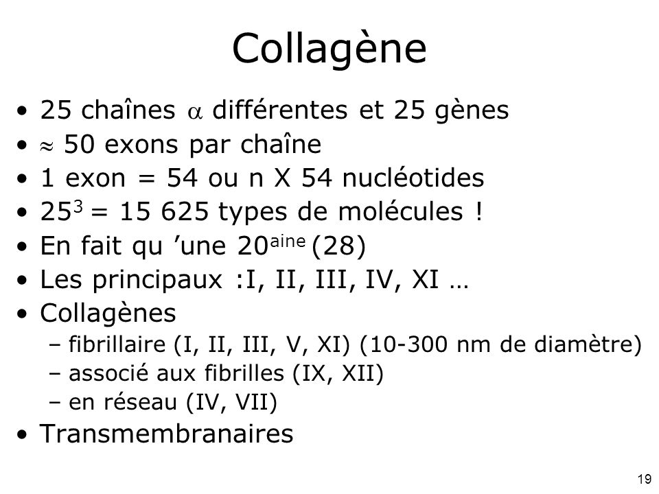 19 Collagène 25 chaînes  différentes et 25 gènes  50 exons par chaîne 1 exon = 54 ou n X 54 nucléotides 25 3 = 15 625 types de molécules ! En fait q