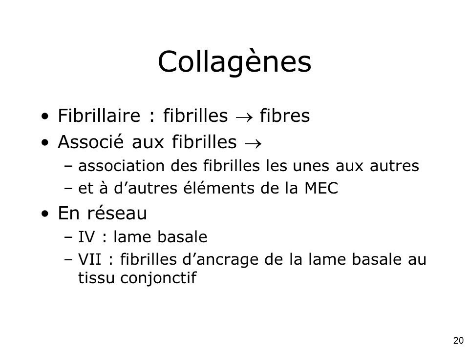 20 Collagènes Fibrillaire : fibrilles  fibres Associé aux fibrilles  –association des fibrilles les unes aux autres –et à d'autres éléments de la MEC En réseau –IV : lame basale –VII : fibrilles d'ancrage de la lame basale au tissu conjonctif