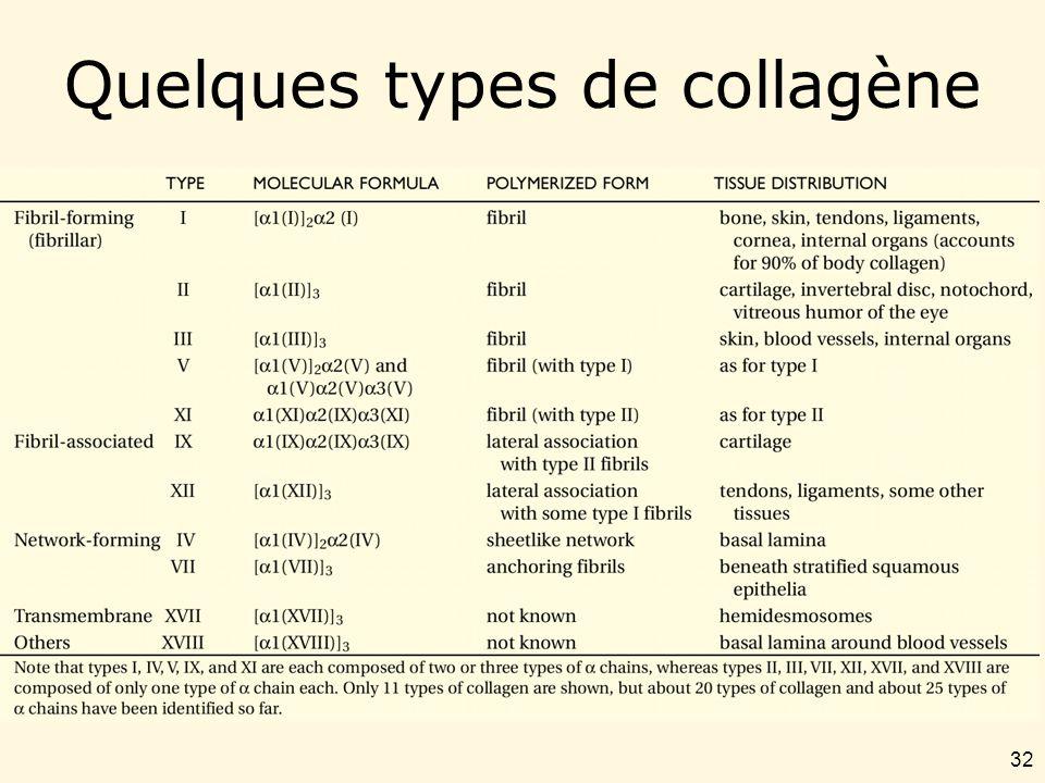 32 Quelques types de collagène Table 19-5