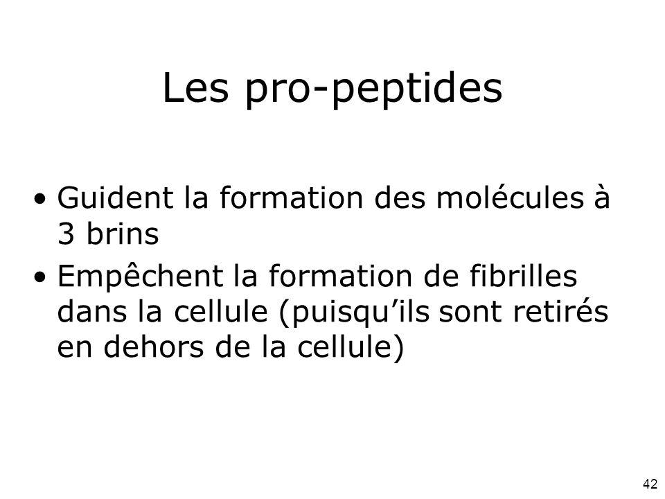 42 Les pro-peptides Guident la formation des molécules à 3 brins Empêchent la formation de fibrilles dans la cellule (puisqu'ils sont retirés en dehors de la cellule)
