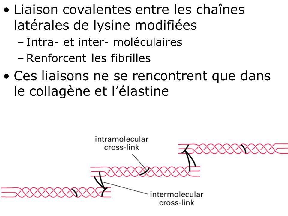 51 Fig 19-46 Liaison covalentes entre les chaînes latérales de lysine modifiées –Intra- et inter- moléculaires –Renforcent les fibrilles Ces liaisons ne se rencontrent que dans le collagène et l'élastine