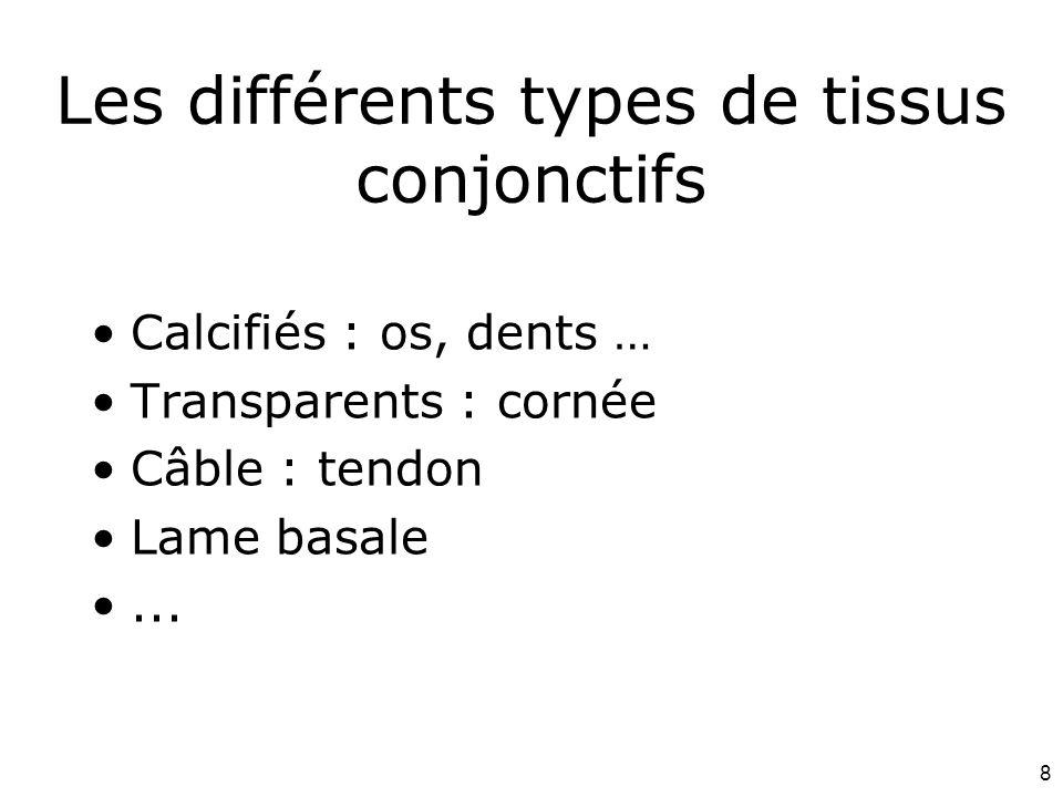 8 Les différents types de tissus conjonctifs Calcifiés : os, dents … Transparents : cornée Câble : tendon Lame basale...