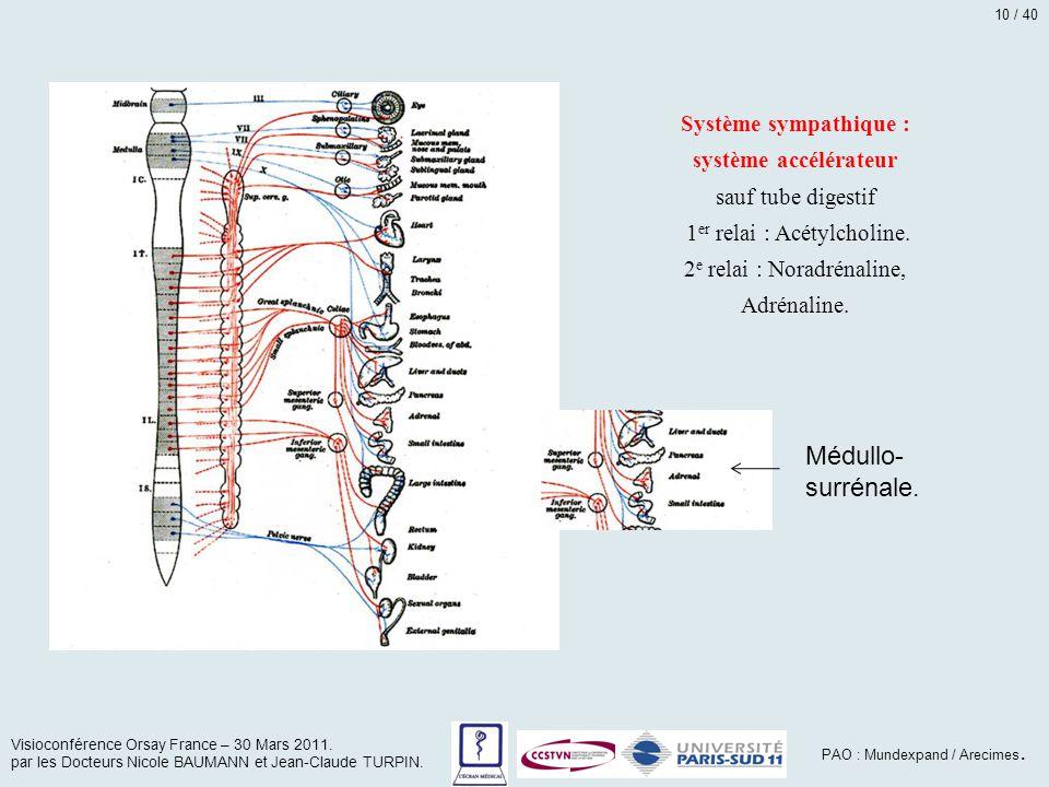 Système sympathique : système accélérateur sauf tube digestif 1 er relai : Acétylcholine. 2 e relai : Noradrénaline, Adrénaline. Médullo- surrénale. V
