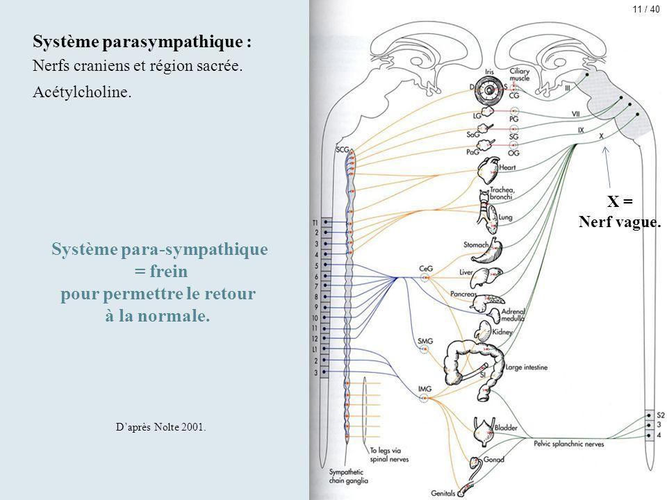 Système parasympathique : Nerfs craniens et région sacrée. Acétylcholine. Système para-sympathique = frein pour permettre le retour à la normale. D'ap