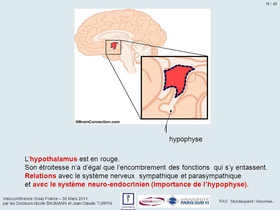 hypothalamus hypophyse L'hypothalamus est en rouge. Son étroitesse n'a d'égal que l'encombrement des fonctions qui s'y entassent. Relations avec le sy