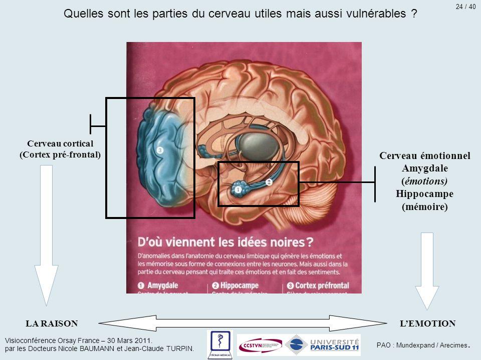 Cerveau émotionnel Amygdale (émotions) Hippocampe (mémoire) Cerveau cortical (Cortex pré-frontal) LA RAISONL'EMOTION Quelles sont les parties du cerve
