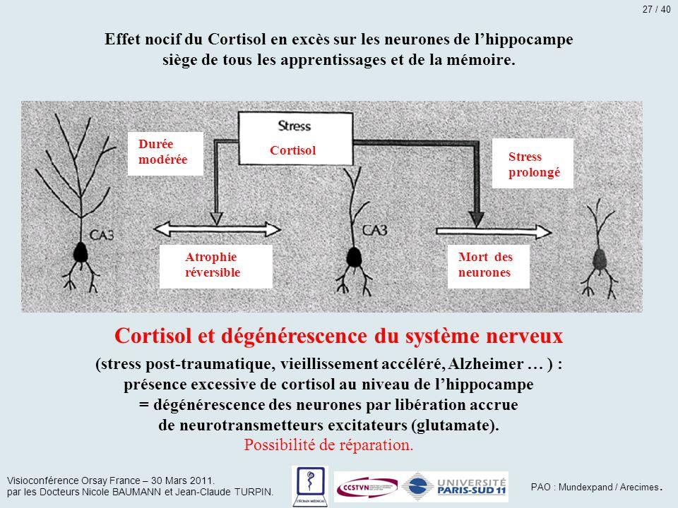 Cortisol Atrophie réversible Durée modérée Stress prolongé Mort des neurones Effet nocif du Cortisol en excès sur les neurones de l'hippocampe siège d