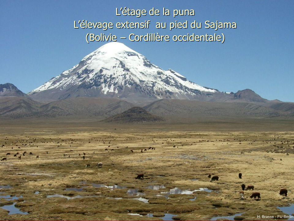 L'étage de la puna L'élevage extensif au pied du Sajama (Bolivie – Cordillère occidentale)