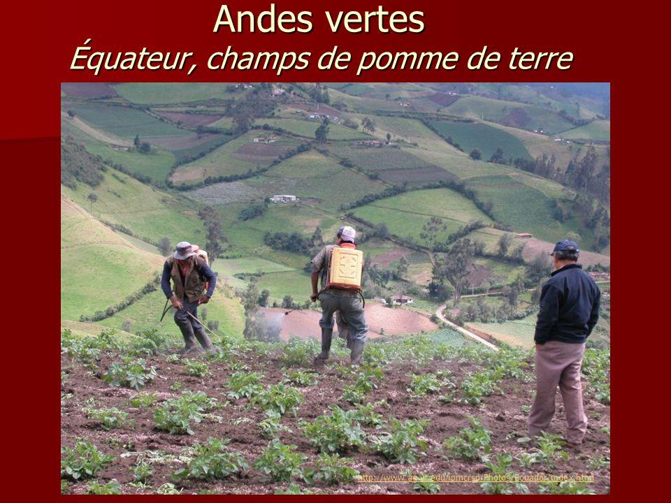 Nevado del Ruiz – Andes Colombiennes Andes vertes Équateur, champs de pomme de terre http://www.ag.vt.edu/ipmcrsp/Photos/Ecuador/index.html