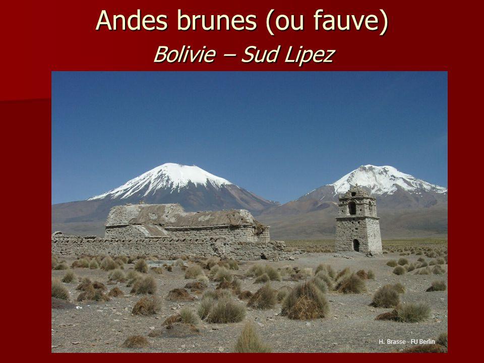 Andes brunes (ou fauve) Bolivie – Sud Lipez H. Brasse - FU Berlin
