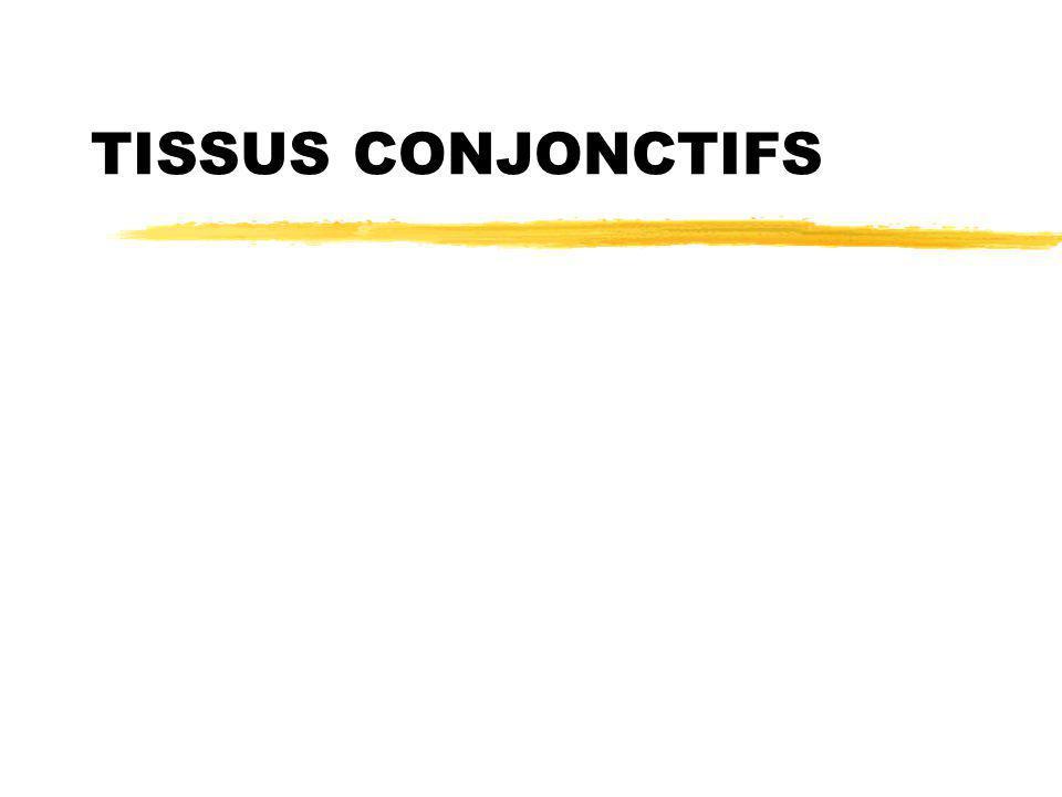 2 Définition Tissu avec Cellules  et MEC+++ Jonctions cellule  MEC +++ Fonctions  soutien  association, cohésion  nutrition, échange  Protection Origine mésechymateuse