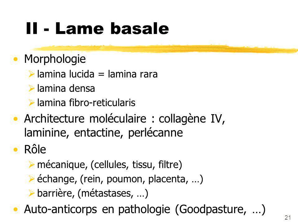 21 II - Lame basale Morphologie  lamina lucida = lamina rara  lamina densa  lamina fibro-reticularis Architecture moléculaire : collagène IV, laminine, entactine, perlécanne Rôle  mécanique, (cellules, tissu, filtre)  échange, (rein, poumon, placenta, …)  barrière, (métastases, …) Auto-anticorps en pathologie (Goodpasture, …)