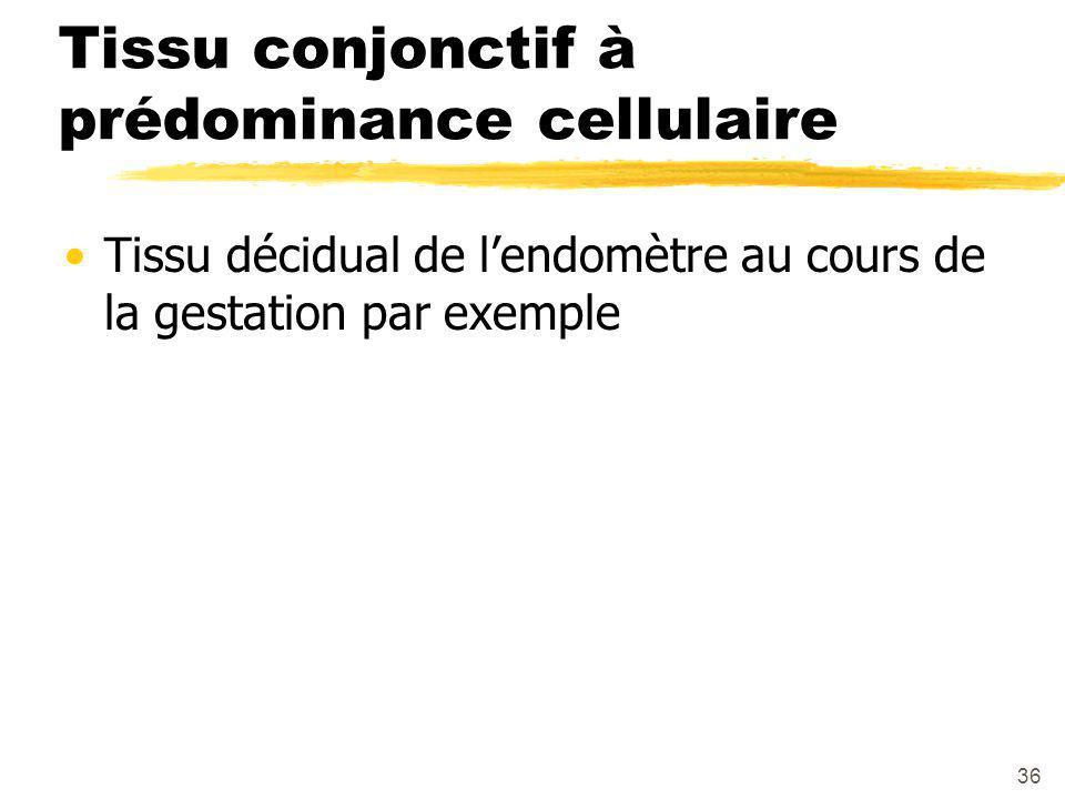 36 Tissu conjonctif à prédominance cellulaire Tissu décidual de l'endomètre au cours de la gestation par exemple