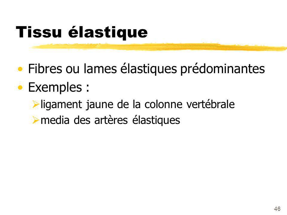 47 Tissu élastique