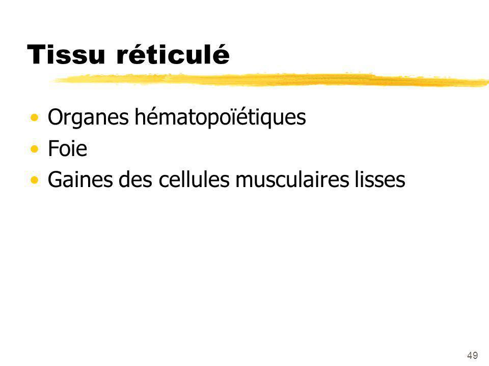 49 Tissu réticulé Organes hématopoïétiques Foie Gaines des cellules musculaires lisses