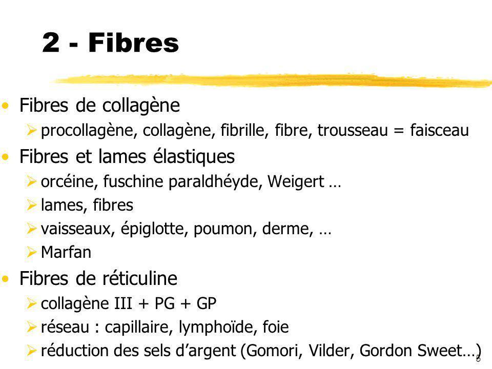 5 2 - Fibres Fibres de collagène  procollagène, collagène, fibrille, fibre, trousseau = faisceau Fibres et lames élastiques  orcéine, fuschine paraldhéyde, Weigert …  lames, fibres  vaisseaux, épiglotte, poumon, derme, …  Marfan Fibres de réticuline  collagène III + PG + GP  réseau : capillaire, lymphoïde, foie  réduction des sels d'argent (Gomori, Vilder, Gordon Sweet…)