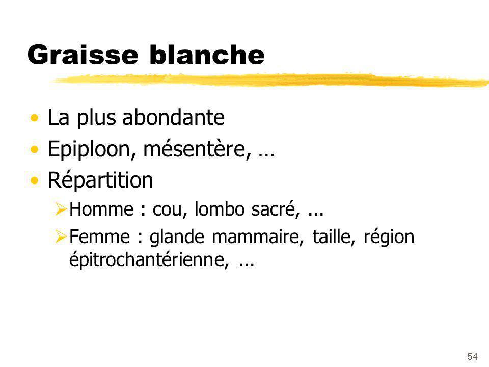 54 Graisse blanche La plus abondante Epiploon, mésentère, … Répartition  Homme : cou, lombo sacré,...