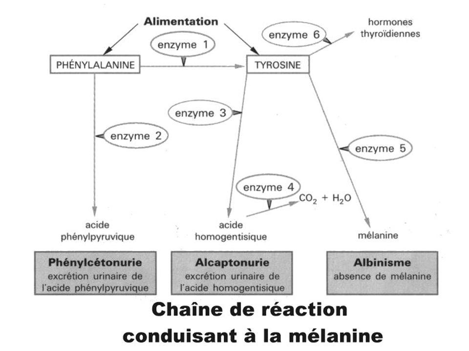 Phénotype moléculaire