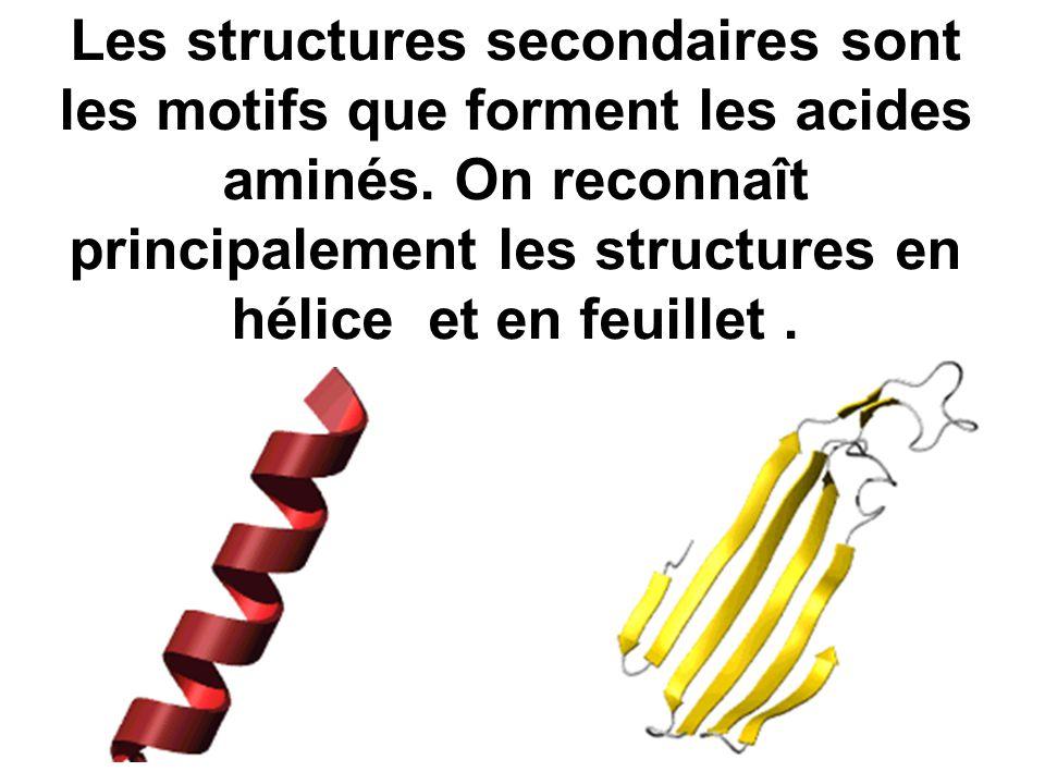 Les structures secondaires sont les motifs que forment les acides aminés. On reconnaît principalement les structures en hélice et en feuillet.