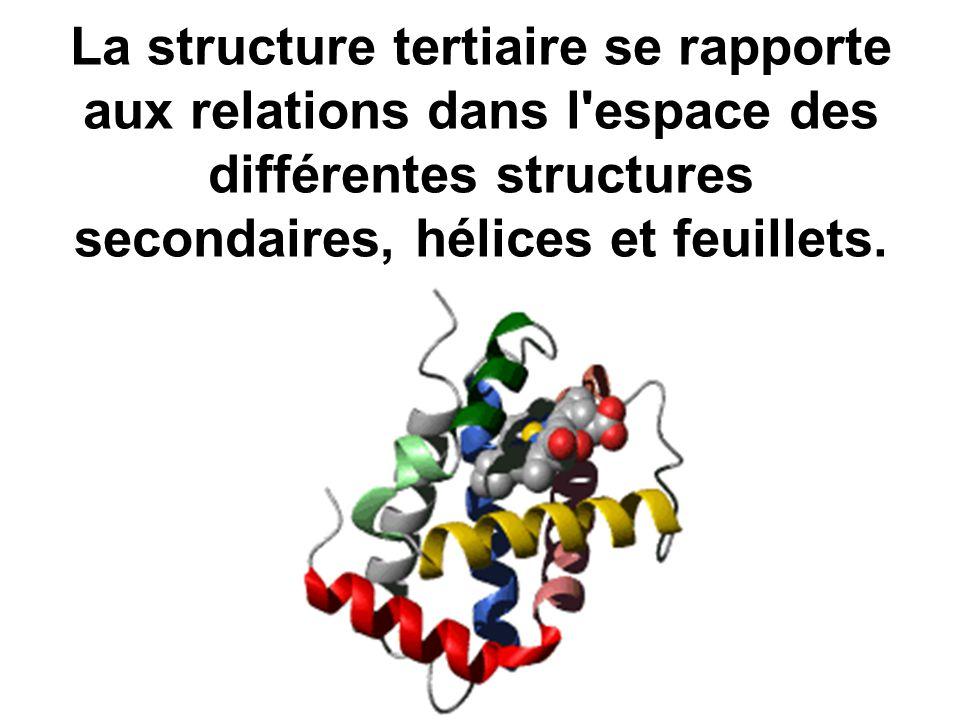 La structure tertiaire se rapporte aux relations dans l'espace des différentes structures secondaires, hélices et feuillets.