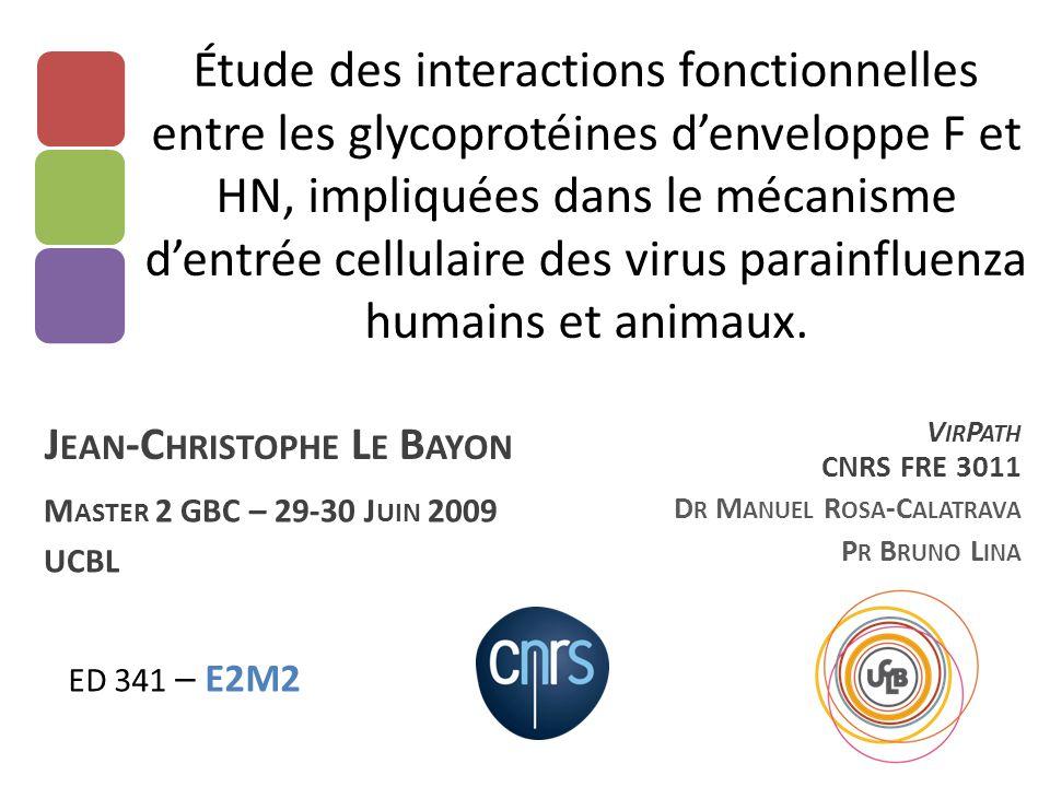 Étude des interactions fonctionnelles entre les glycoprotéines d'enveloppe F et HN, impliquées dans le mécanisme d'entrée cellulaire des virus parainf