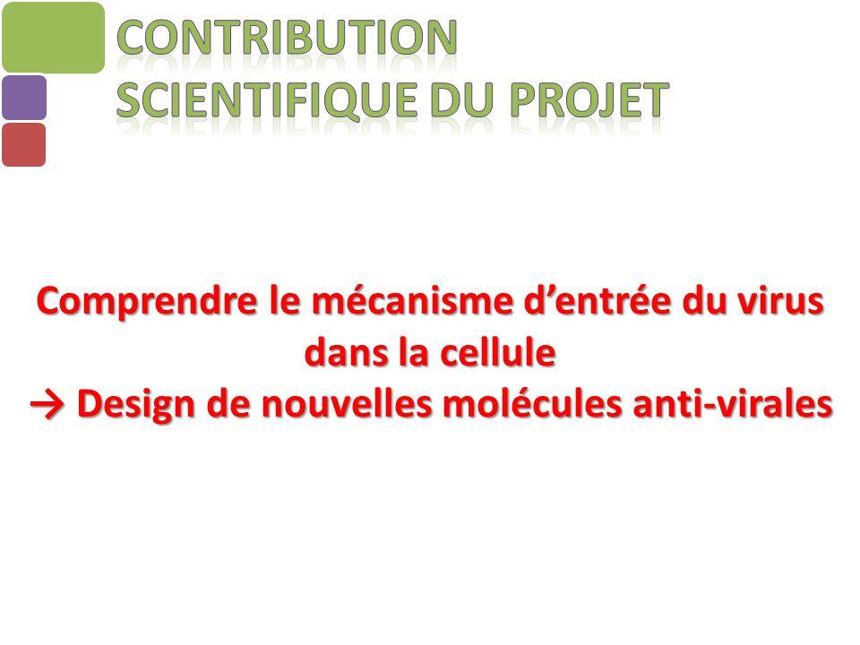 Comprendre le mécanisme d'entrée du virus dans la cellule → Design de nouvelles molécules anti-virales