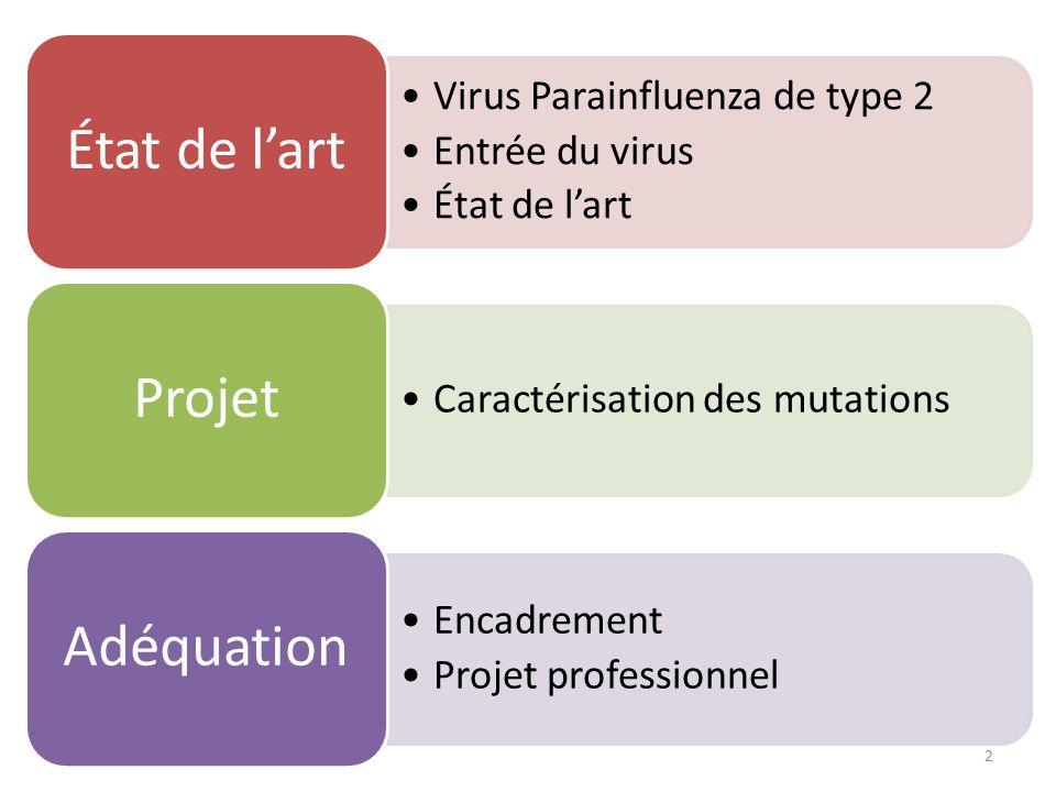 Virus Parainfluenza de type 2 Entrée du virus État de l'art Caractérisation des mutations Projet Encadrement Projet professionnel Adéquation 2