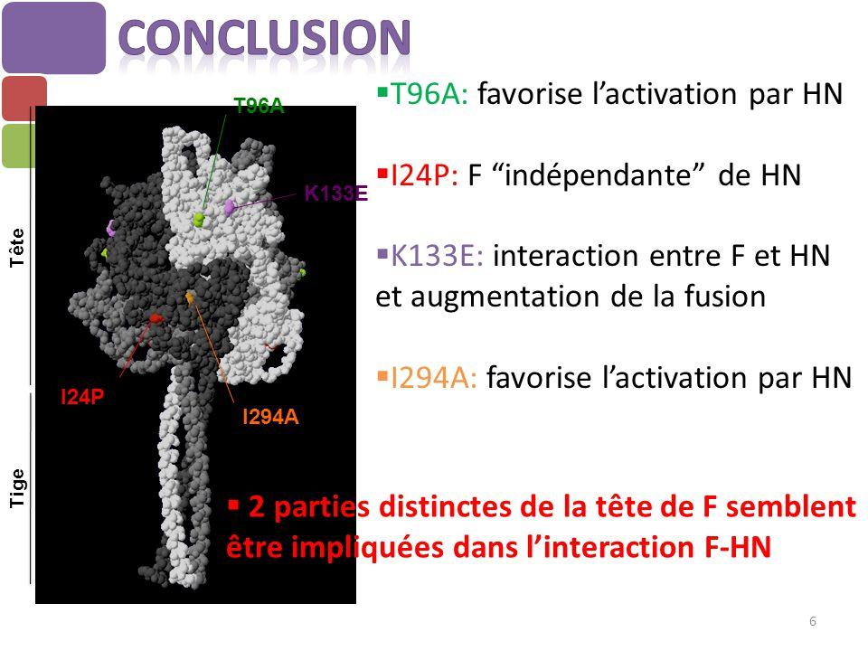 """ T96A: favorise l'activation par HN  I24P: F """"indépendante"""" de HN  K133E: interaction entre F et HN et augmentation de la fusion  I294A: favorise"""