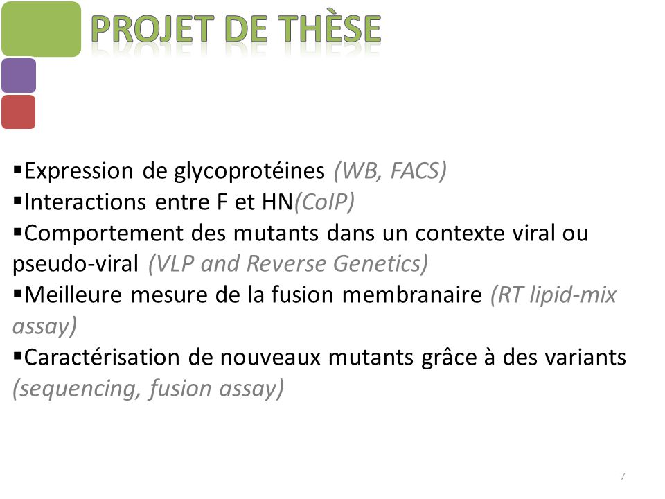 7  Expression de glycoprotéines (WB, FACS)  Interactions entre F et HN(CoIP)  Comportement des mutants dans un contexte viral ou pseudo-viral (VLP