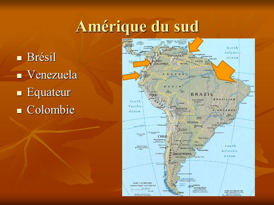 Brésil Brésil Venezuela Venezuela Equateur Equateur Colombie Colombie