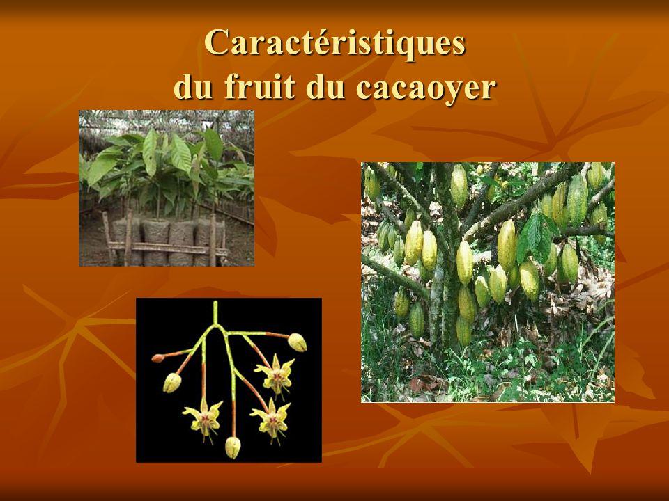 Caractéristiques du fruit du cacaoyer