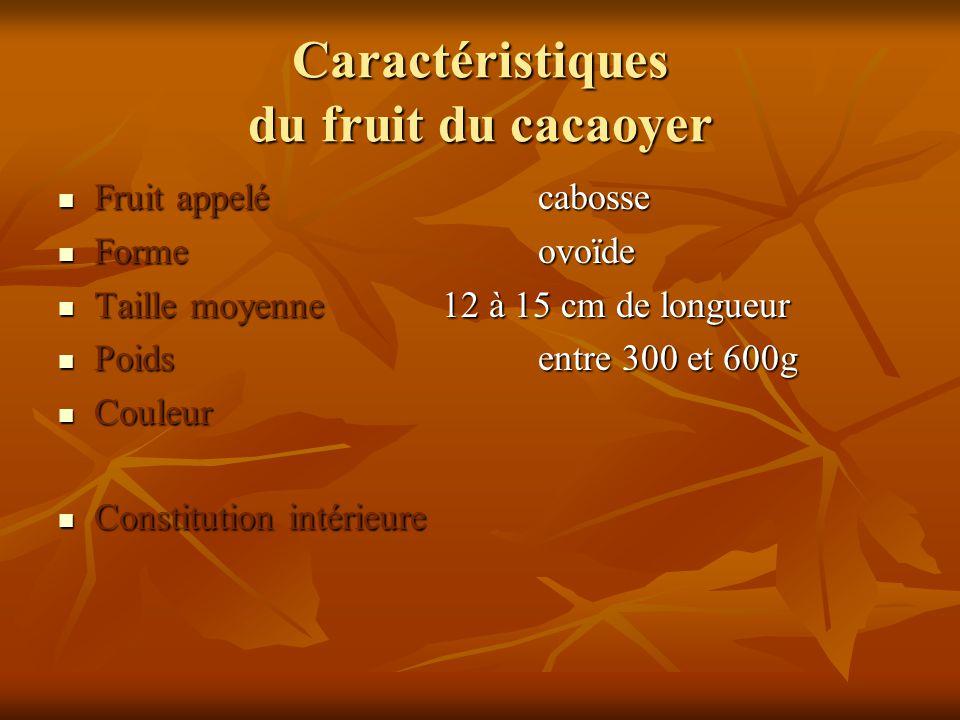 Caractéristiques du fruit du cacaoyer Fruit appelécabosse Fruit appelécabosse Formeovoïde Formeovoïde Taille moyenne12 à 15 cm de longueur Taille moye
