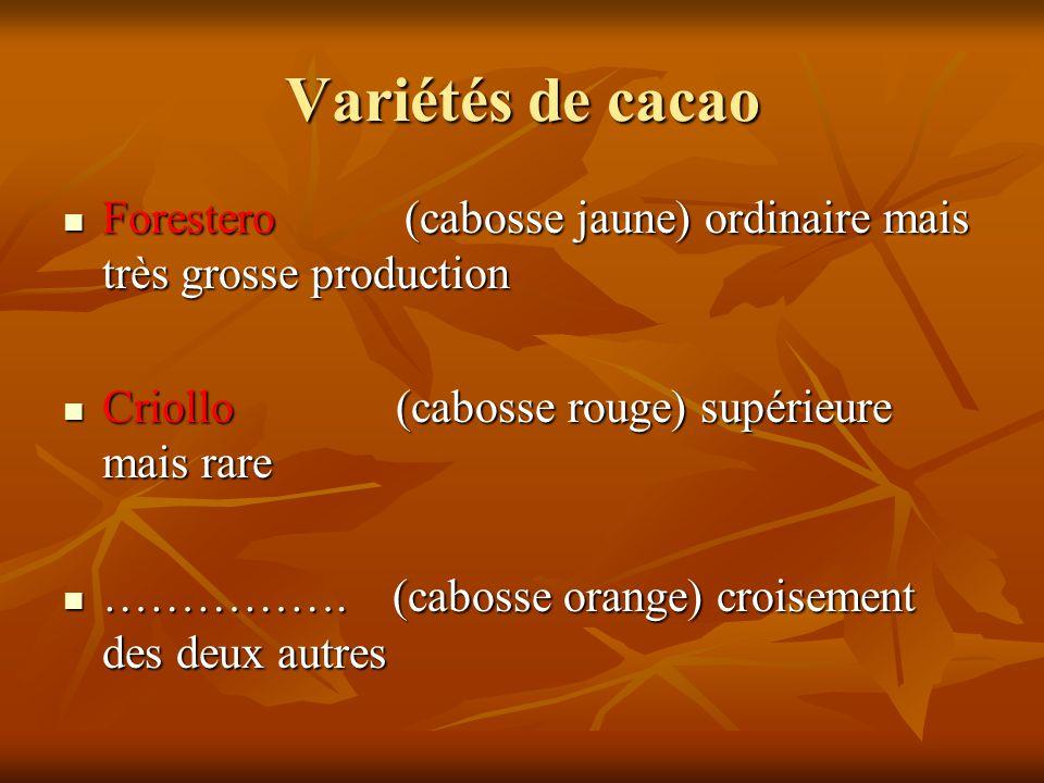 Variétés de cacao Forestero (cabosse jaune) ordinaire mais très grosse production Forestero (cabosse jaune) ordinaire mais très grosse production Crio