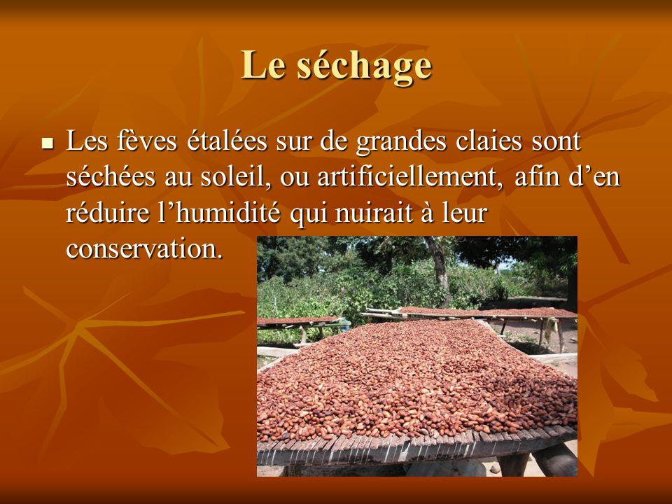 Les fèves étalées sur de grandes claies sont séchées au soleil, ou artificiellement, afin d'en réduire l'humidité qui nuirait à leur conservation. Les