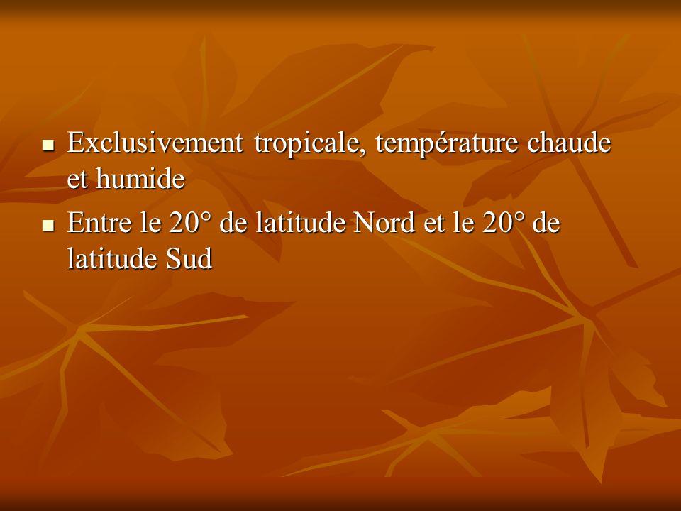Exclusivement tropicale, température chaude et humide Exclusivement tropicale, température chaude et humide Entre le 20° de latitude Nord et le 20° de