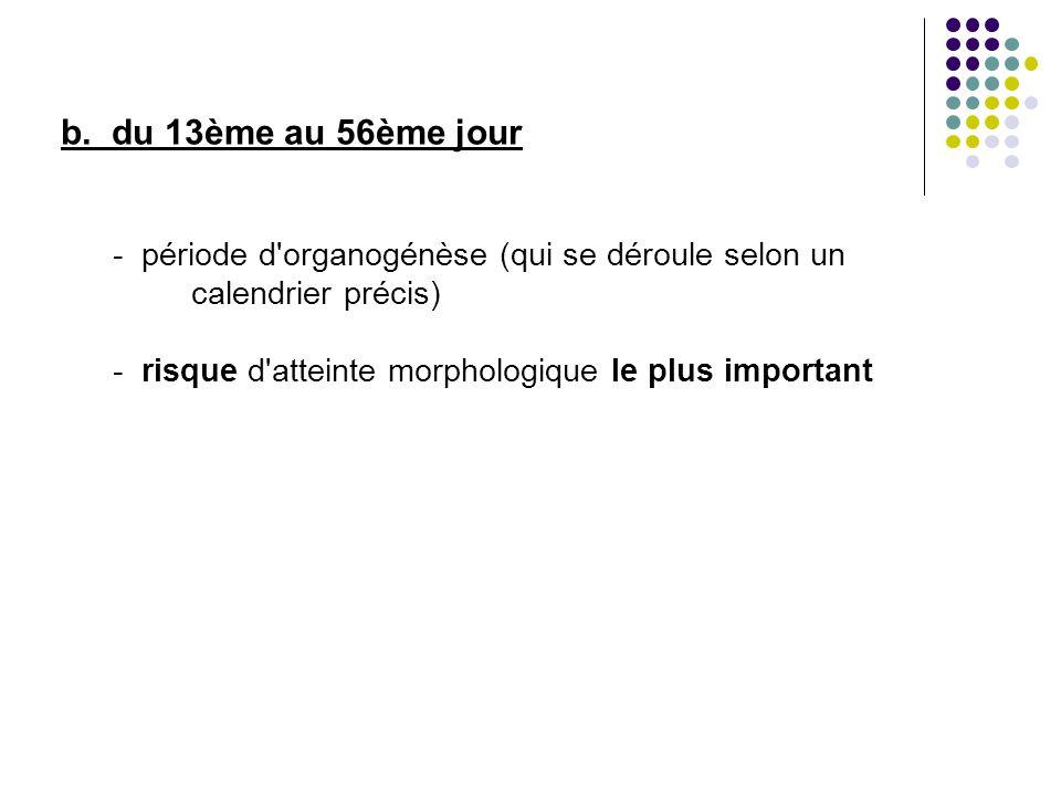 b. du 13ème au 56ème jour - période d'organogénèse (qui se déroule selon un calendrier précis) - risque d'atteinte morphologique le plus important