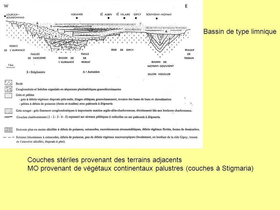 Bassin de type limnique Couches stériles provenant des terrains adjacents MO provenant de végétaux continentaux palustres (couches à Stigmaria)