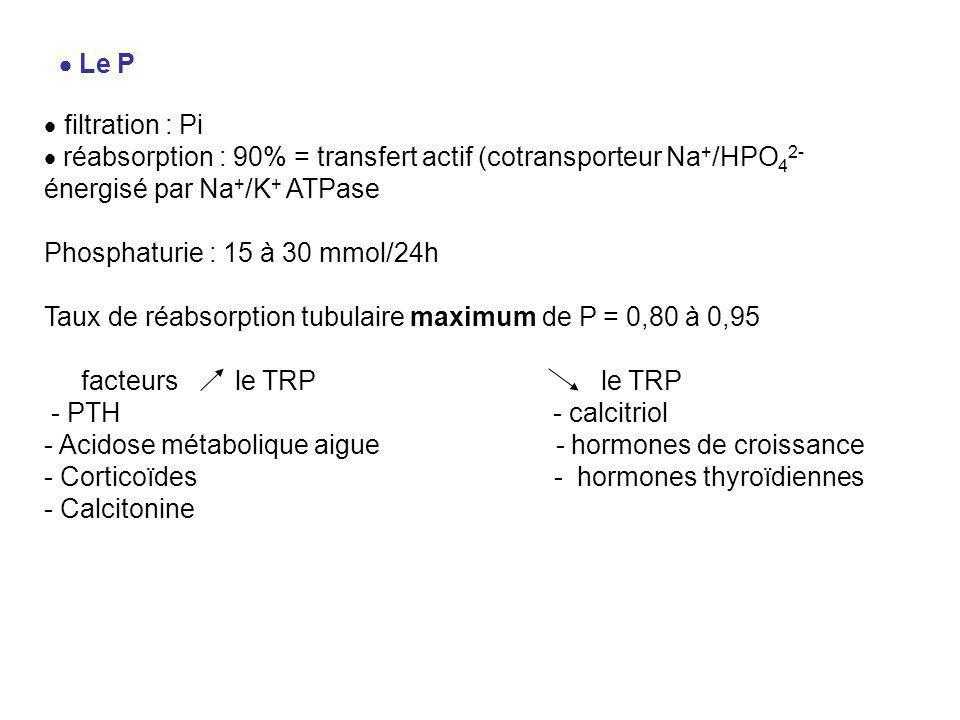  Le P  filtration : Pi  réabsorption : 90% = transfert actif (cotransporteur Na + /HPO 4 2- énergisé par Na + /K + ATPase Phosphaturie : 15 à 30 mmol/24h Taux de réabsorption tubulaire maximum de P = 0,80 à 0,95 facteurs le TRP le TRP - PTH - calcitriol - Acidose métabolique aigue - hormones de croissance - Corticoïdes - hormones thyroïdiennes - Calcitonine
