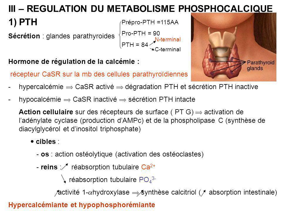 III – REGULATION DU METABOLISME PHOSPHOCALCIQUE 1)PTH Sécrétion : glandes parathyroides Hormone de régulation de la calcémie : récepteur CaSR sur la mb des cellules parathyroïdiennes -hypercalcémie  CaSR activé  dégradation PTH et sécrétion PTH inactive -hypocalcémie  CaSR inactivé  sécrétion PTH intacte Action cellulaire sur des récepteurs de surface ( PT G)  activation de l'adénylate cyclase (production d'AMPc) et de la phospholipase C (synthèse de diacylglycérol et d'inositol triphosphate)  cibles : - os : action ostéolytique (activation des ostéoclastes) - reins : réabsorption tubulaire Ca 2+ réabsorption tubulaire PO 4 3- activité 1-  hydroxylase  synthèse calcitriol ( absorption intestinale) Hypercalcémiante et hypophosphorémiante Prépro-PTH =115AA Pro-PTH = 90 PTH = 84 N-terminal C-terminal