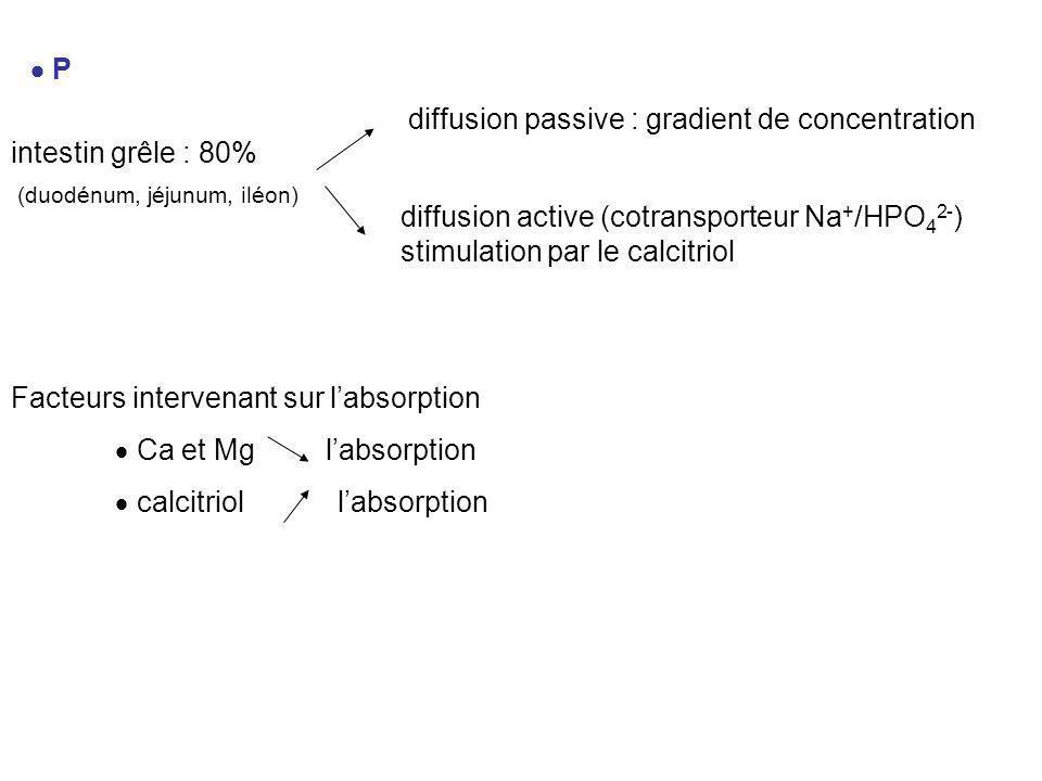 intestin grêle : 80% (duodénum, jéjunum, iléon) diffusion passive : gradient de concentration diffusion active (cotransporteur Na + /HPO 4 2- ) stimulation par le calcitriol Facteurs intervenant sur l'absorption  Ca et Mg l'absorption  calcitriol l'absorption  P
