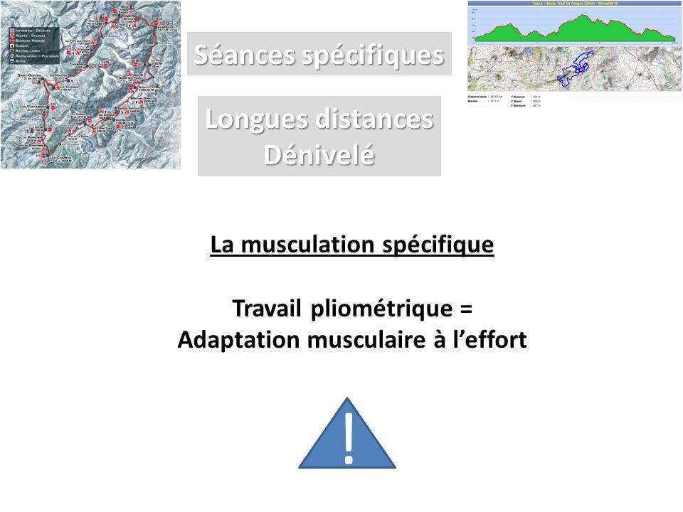 Séances spécifiques Longues distances Dénivelé La musculation spécifique Travail pliométrique = Adaptation musculaire à l'effort !