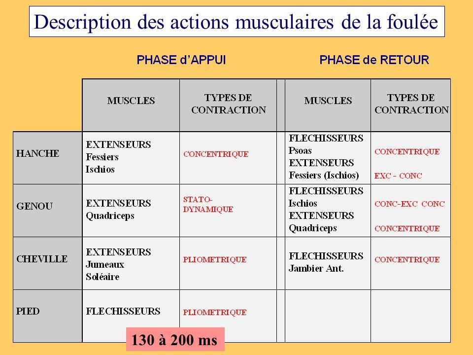 Description des actions musculaires de la foulée 130 à 200 ms