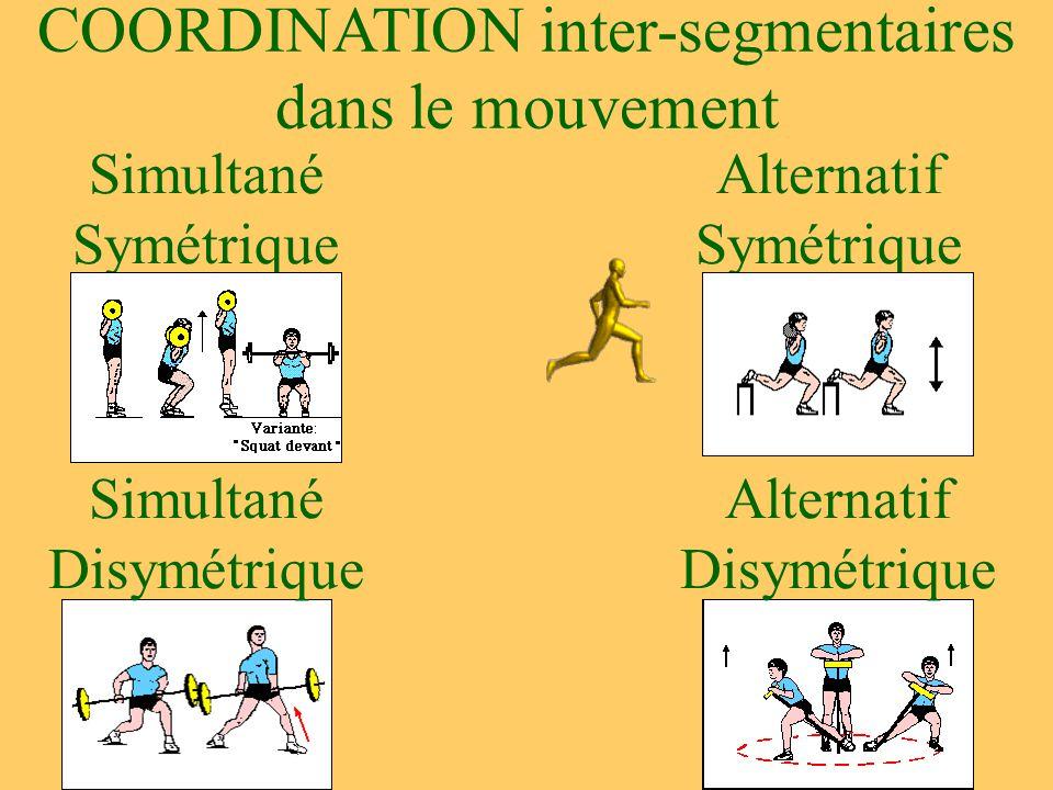 COORDINATION inter-segmentaires dans le mouvement Simultané Symétrique Simultané Disymétrique Alternatif Disymétrique Alternatif Symétrique