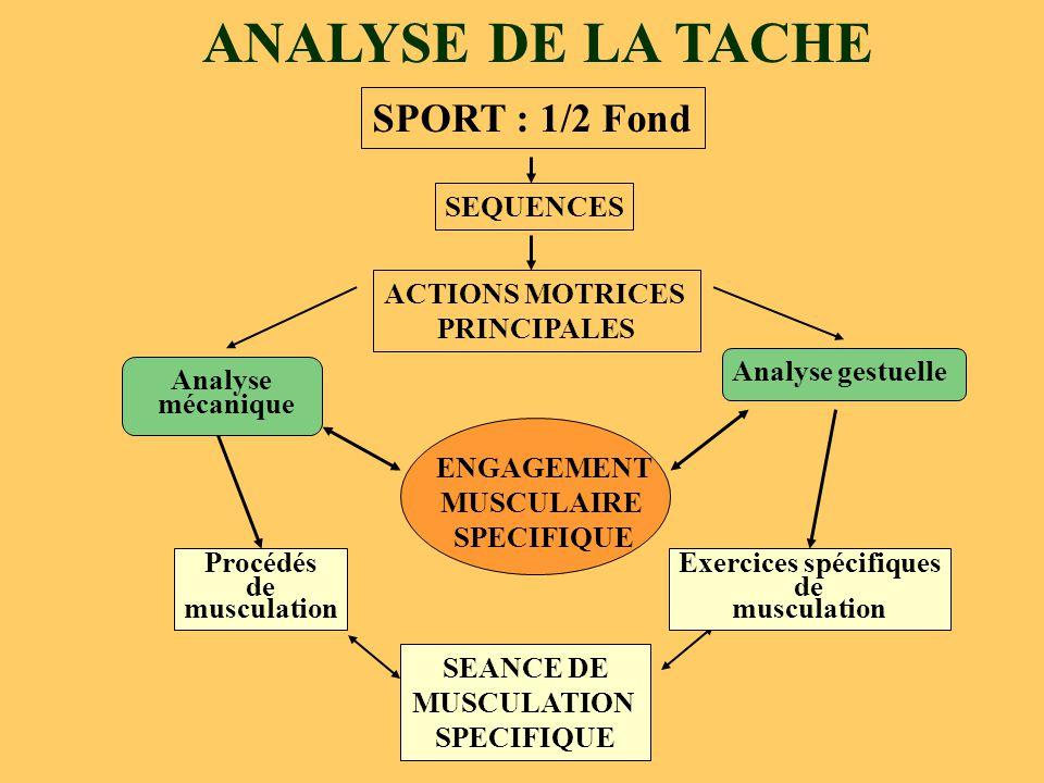 ANALYSE DE LA TACHE SEANCE DE MUSCULATION SPECIFIQUE SPORT : 1/2 Fond SEQUENCES ACTIONS MOTRICES PRINCIPALES Exercices spécifiques de musculation Proc