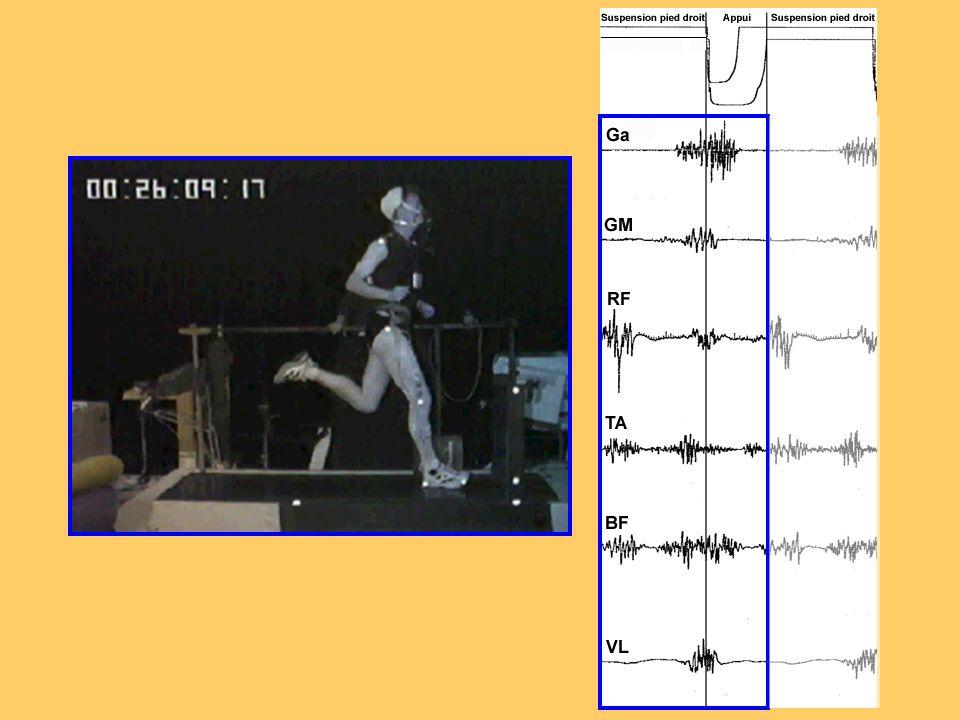 Activité mécanique articulaire sur l'appui de course Pliométrique Excentrique Stato- dynamique Concentrique