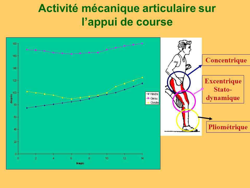 Caractéristiques: Prise de sol basse, flexion marquée du genou à la pose d'appui Forces sur l'horizontale fournies par les extenseurs de la hanche de la cheville et une forte participation des extenseurs du genou dans la phase terminale de l'appui.