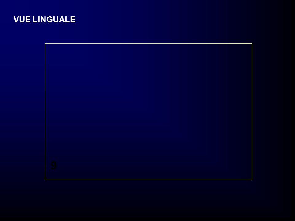 9 VUE LINGUALE